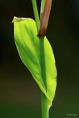 Photograph - Green by Alexander Fedin