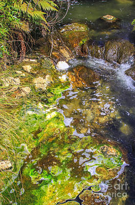 Photograph - Green Algae In Rotorua by Patricia Hofmeester