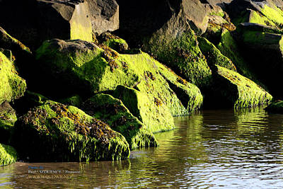 Print featuring the photograph Green Algae by Paul SEQUENCE Ferguson             sequence dot net