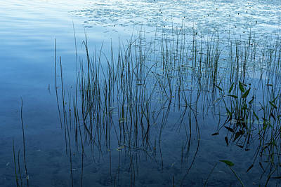 Photograph - Green And Blue Serenity - Smooth Wetland Morning by Georgia Mizuleva