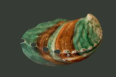 Photograph - Green And Brown Shell Transparency by Richard Goldman