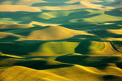 Dappled Light Photograph - Green And Gold Acres by Todd Klassy