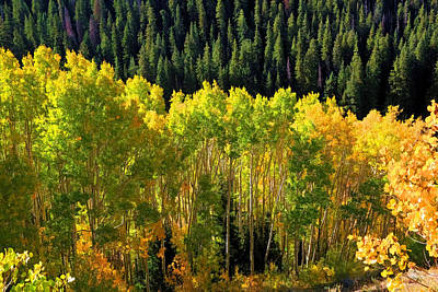 Big Cottonwood Canyon Photograph - Green And Gold by Donna Kennedy