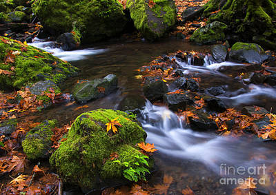 Autumn Photograph - Green And Gold by Mike Dawson
