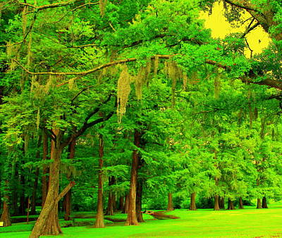 Photograph - Green And Golden by Julie Lueders