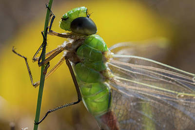 Photograph - Green And Mean by Robert Potts