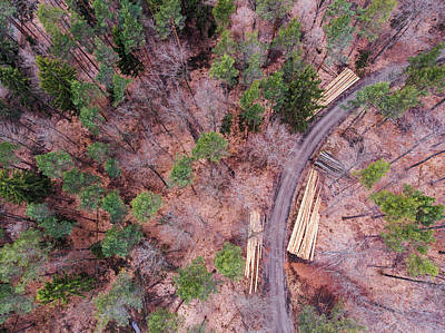 Photograph - Green And Orange Forest Aerial Image by Matthias Hauser
