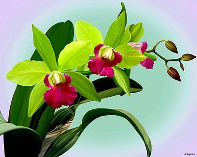 Mixed Media - Green And Pink Cattleya Orchids by Anthony Seeker