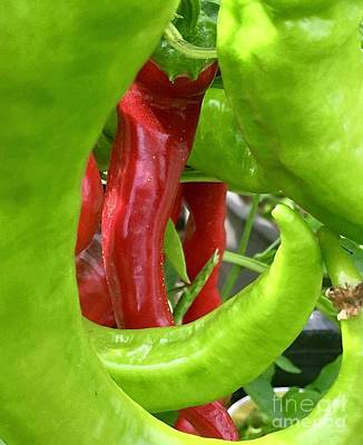 Photograph - Green And Red Peppers by Susan Garren