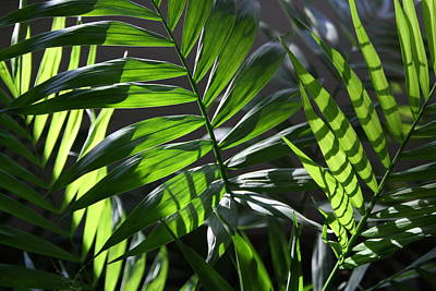 Photograph - Green And Shadow by Martha Johnson