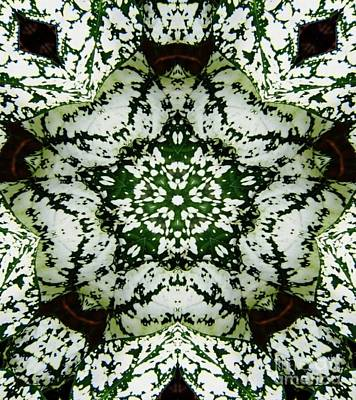 Digital Art - Green And White by D Hackett