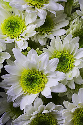 Pom Photograph - Green And White Poms by Garry Gay