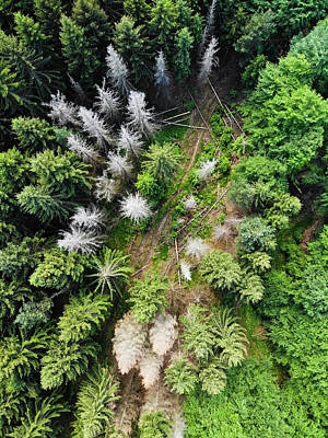 Photograph - Green And White Trees From Above Aerial View by Matthias Hauser