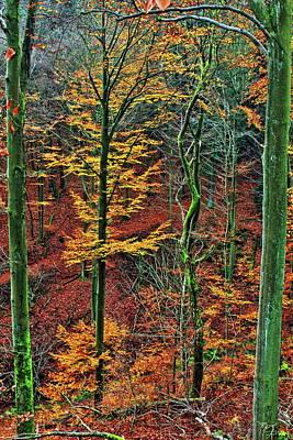 Taunus Photograph - Green And Yellow by Daniel Koglin