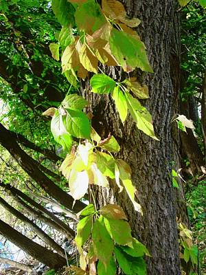 Photograph - Green And Yellow Leaves by Stephanie Moore
