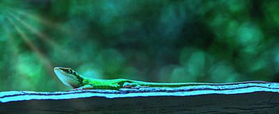 Digital Art - Green Anole Lizard by Randy Bayne