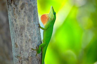 Green Anole Art Print by Rich Leighton