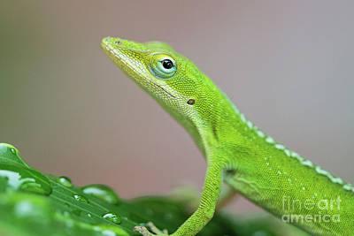 Photograph - Green Anole by Scott Pellegrin