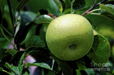 Photograph - Green Apple by Paul Mashburn
