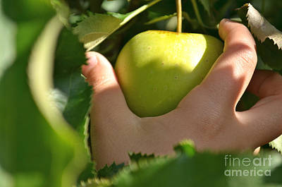 Green Apple Picking Print by Jason Freedman