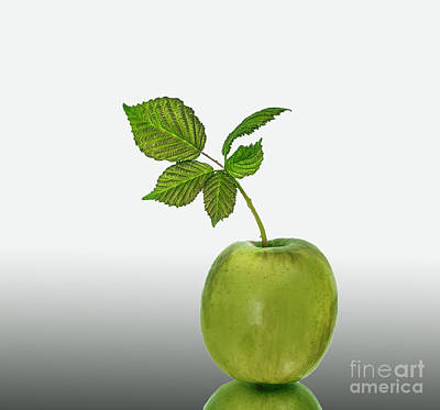 Photograph - Green Apple by Shirley Mangini