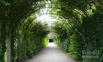 Green Arbor Of Mirabell Garden Art Print by Carol Groenen