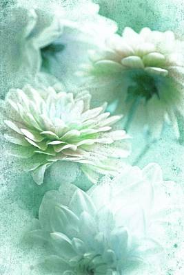 Photograph - Green Asters by Lali Kacharava