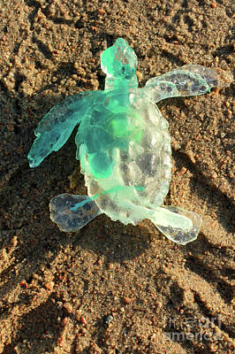 Sculpture - Green Baby Sea Turtle From The Feral Plastic Series By Adam Long by Adam Long