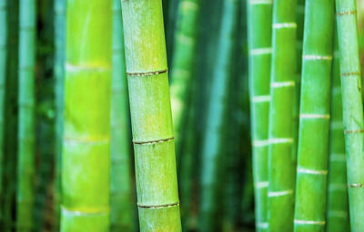 Green Bamboo Art - Abstract Nature Photography Art Print by Wall Art Prints