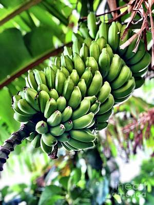 Photograph - Green Bananas by Laura Forde