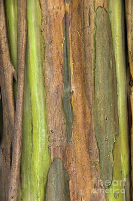 Art Print featuring the photograph Green Bark 3 by Werner Padarin