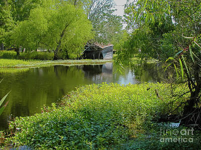 Photograph - Green Bayou La by Kathleen K Parker