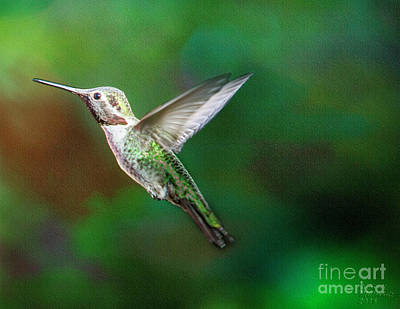 Hummingbird Photograph - Green Beauty by David Millenheft