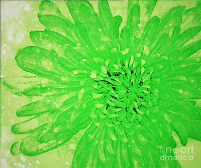 Photograph - Green Beauty by Rachel Hannah