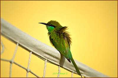 Photograph - Green Bee Eater by Sonali Gangane