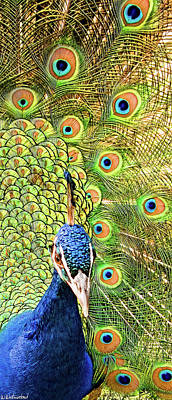 Photograph - Green Blue Peacock Showing Off His Feathered Tail No2 by Weston Westmoreland