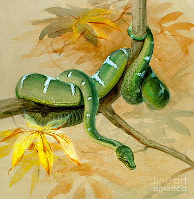Boa Constrictor Painting - Green Boa by Joseph Wolf