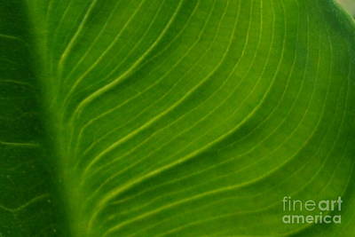 Photograph - Green by Bob Sample