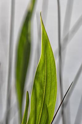 Green Botanical Composition Art Print by John Harmon
