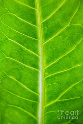 Going Green Photograph - Green Botany -  Part 2 Of 3 by Sean Davey
