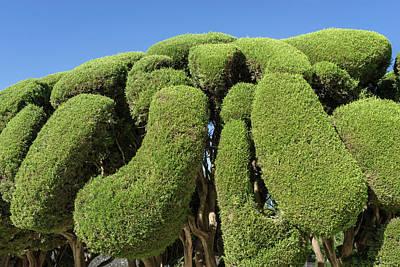 Photograph - Green Boulders - Sensually Sculptured Cypresses by Georgia Mizuleva