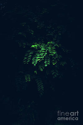 Photograph - Green Branch In A Mysterious Lighting. by Michal Bednarek