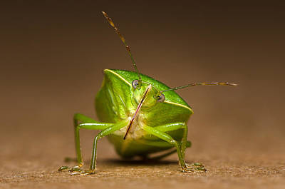Photograph - Green Bug by Tin Lung Chao