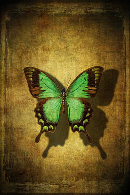 Green Butterfly Shadow Art Print