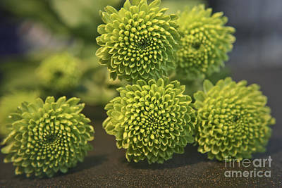 Photograph - Green Buttons by Terri Waters