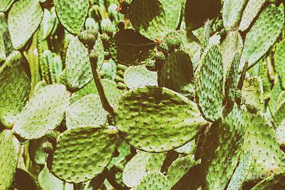 Green Cactus Fields In Summer Print by Radu Bercan