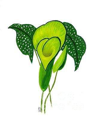 Painting - Green Calla Lily Study by Mary Erbert