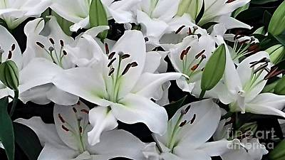 Photograph - Green Centred White Lilies by Joan-Violet Stretch