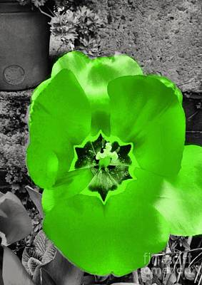 Photograph - Green Colour Splash Tulip by Joan-Violet Stretch