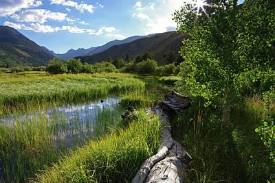 Green Creek Meadow Art Print